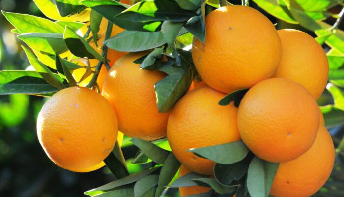Turkish Orange