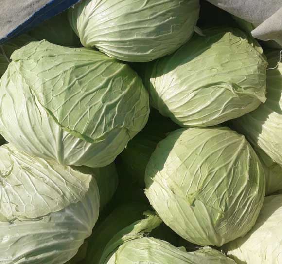 turkish cabbage