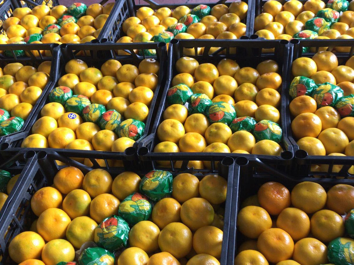 Turkish mandarin